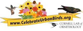 free celebrate urban birds kit