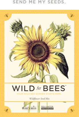 free seeds for bees