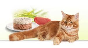 free petreet cat food